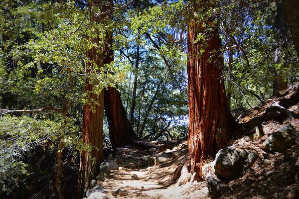Photograph - Ernie Maxwell Scenic Trail - Idyllwild by Glenn McCarthy