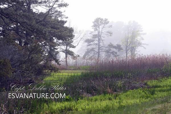 Photograph - Es Nature A by Captain Debbie Ritter