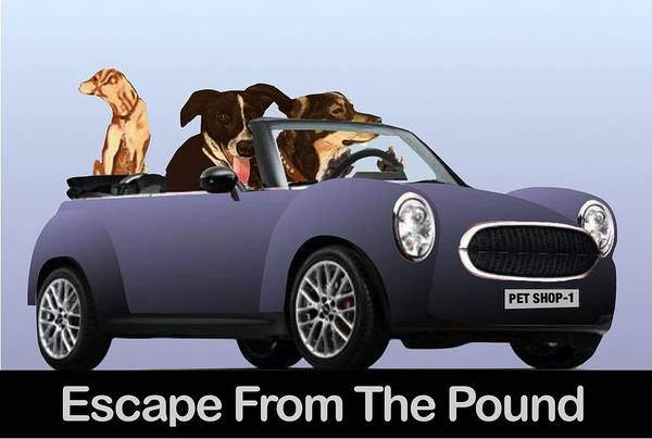 Painting - Escape From The Pound by Frank Hunter