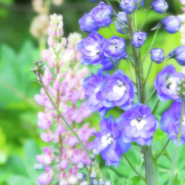 Wall Art - Photograph - Escape To The Garden by Bonnie Bruno