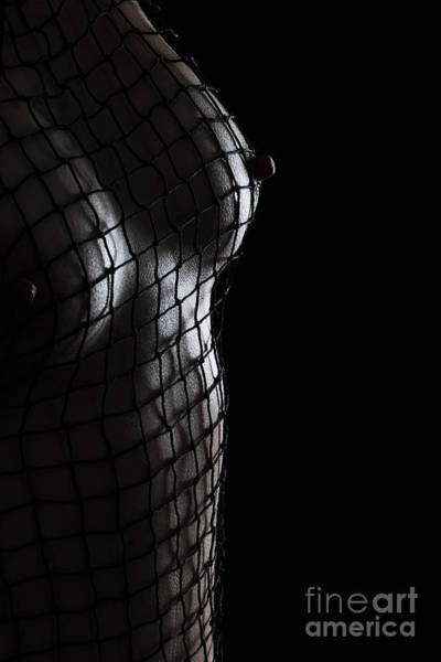 Photograph - Escaping The Net by Robert WK Clark