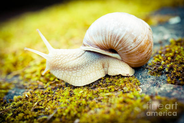 Photograph - Escargot Artmif.lv by Raimond Klavins