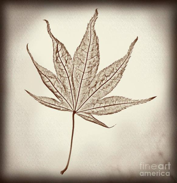 Photograph - Essence Of A Leaf Burnt Edge by Karen Adams
