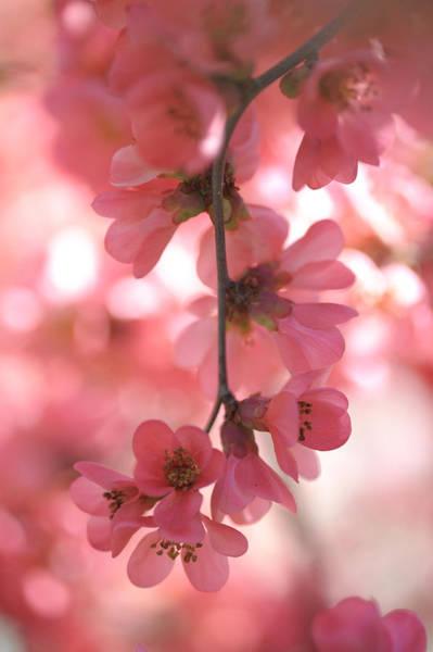 Photograph - Essence Of Beauty by Jenny Rainbow