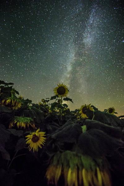 Photograph - Estelline by Aaron J Groen