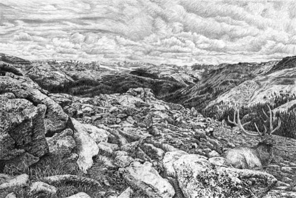 Elk Mountain Drawing - Estes Elk by Craig Carlson