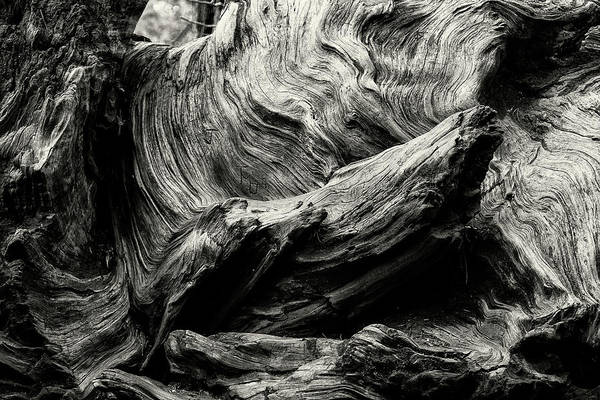 Photograph - Etched By Nature Scarred By Man Bw by Belinda Greb