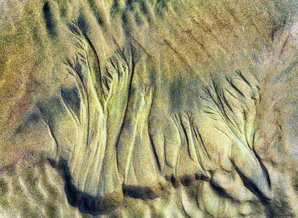 Photograph - Etches In Sand By Nature by Dee Browning