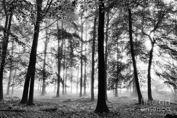 Wall Art - Photograph - Ethereal Beech Wood by Tim Gainey