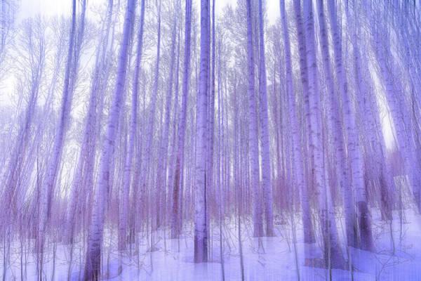 Wall Art - Photograph - Winter Light by Eric Glaser