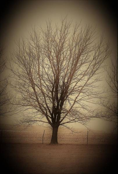 Wall Art - Photograph - Ethereal Tree by Toni Grote