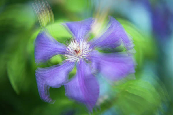 Photograph - Ethereal Vibrations. Purple Clematis Flower by Jenny Rainbow