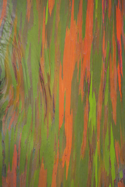 Photograph - Eucalyptus Abstract by Patti Deters