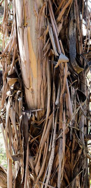 Photograph - Eucalyptus Bark - Australia by Steven Ralser