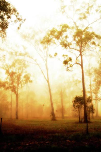 Wall Art - Photograph - Eucalyptus Fog by Sarah-jane Laubscher