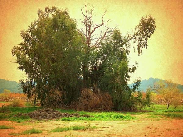 Photograph - Eucalyptus Grove Vintage by Judy Kennedy