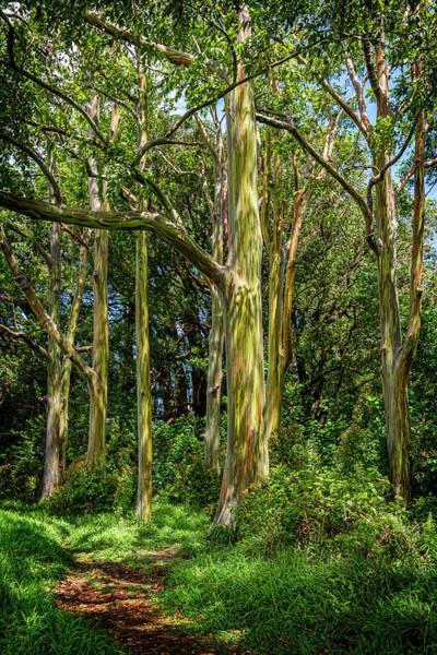 Wall Art - Photograph - Eucalyptus by Kelley King
