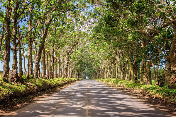 Pavement Wall Art - Photograph - Eucalyptus Tree Tunnel - Kauai Hawaii by Brian Harig