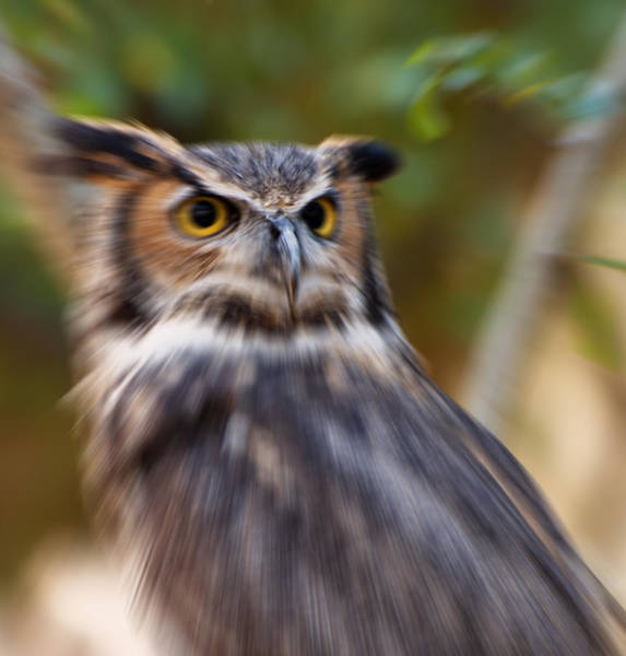 Digital Art - Eurasian Eagle Owl Abstract by Chris Flees