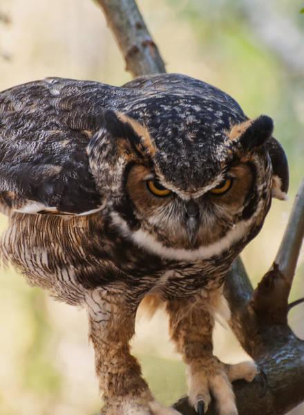 Digital Art - Eurasian Eagle Owl by Chris Flees