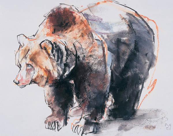 Bear Drawing - European Brown Bear by Mark Adlington