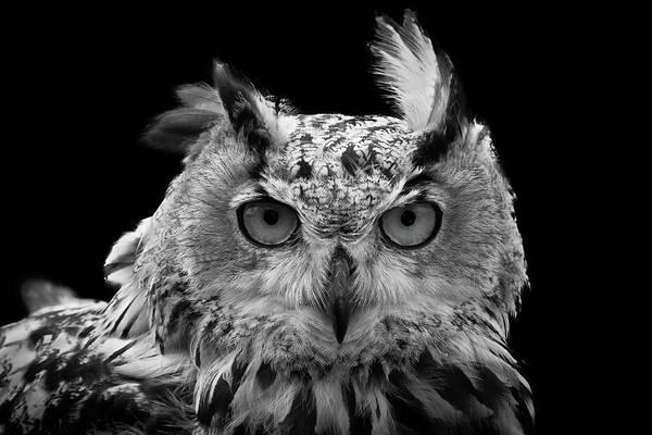 Wall Art - Photograph - European Eagle Owl by Chris Whittle