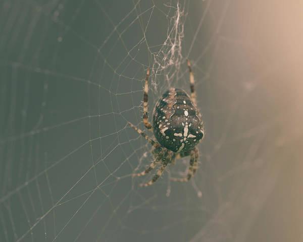 Photograph - European Garden Spider B by Jacek Wojnarowski