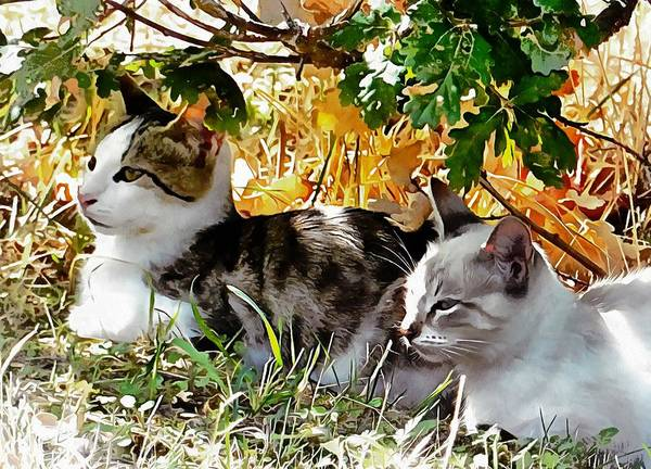 Photograph - Even Kittens Gossip by Dorothy Berry-Lound