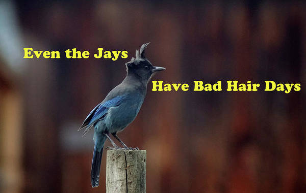 Photograph - Even The Jays by Ben Upham III