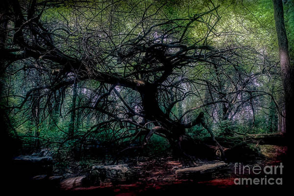 Impressionistic Vineyard Wall Art - Photograph - Evening Angel Oak by Luther Fine Art