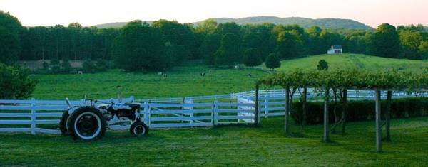 Photograph - Evening At New Pond Farm by Polly Castor