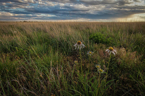 Photograph - Evening At The Pasture by Scott Bean