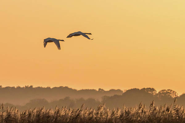 Photograph - Evening Flight Home by Wendy Cooper