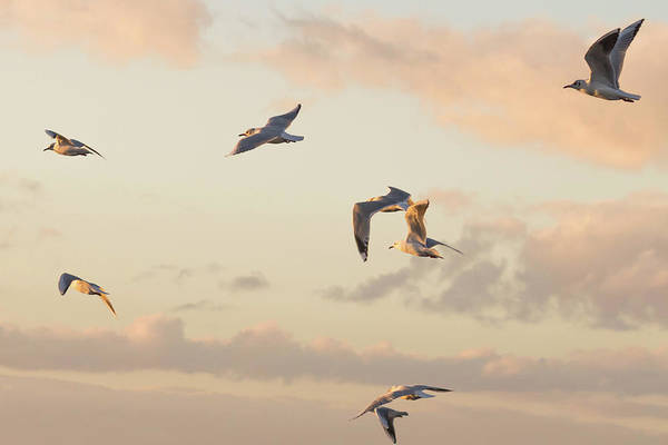 Photograph - Evening Gulls by Wendy Cooper