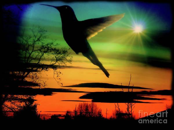 Feather Stars Photograph - Evening Hummingbird II by Al Bourassa