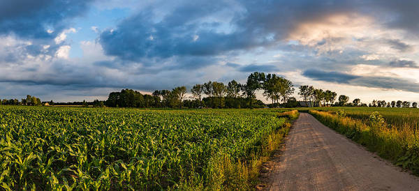 Photograph - Evening In A Cornfield by Dmytro Korol