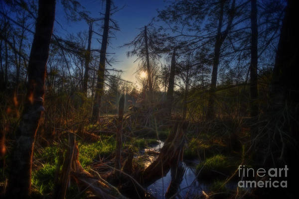 Photograph - Evening In A Cranberry Glades Bog by Dan Friend