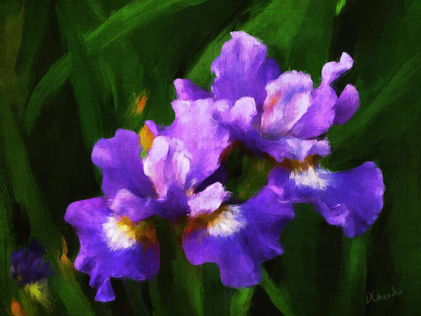 Painting - Evening Iris by Diane Chandler