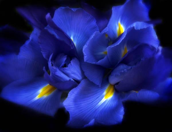 Iris Photograph - Evening Iris by Jessica Jenney