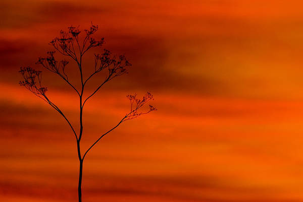 Photograph - Evening Light  by Cliff Norton