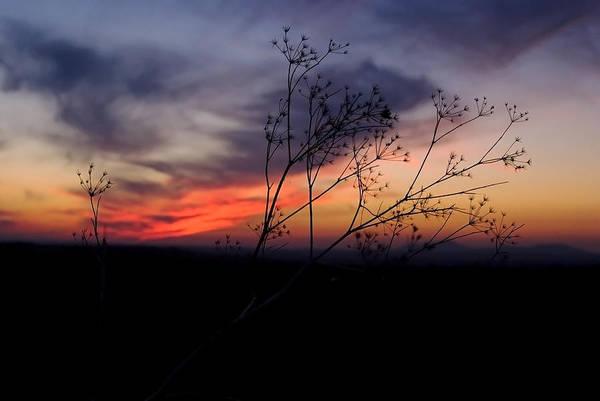 Evening Light Over Meadow Art Print
