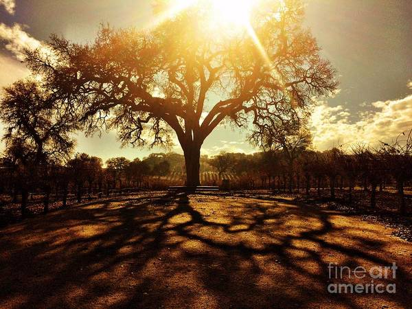 Photograph - Evening Light by S Forte Designs