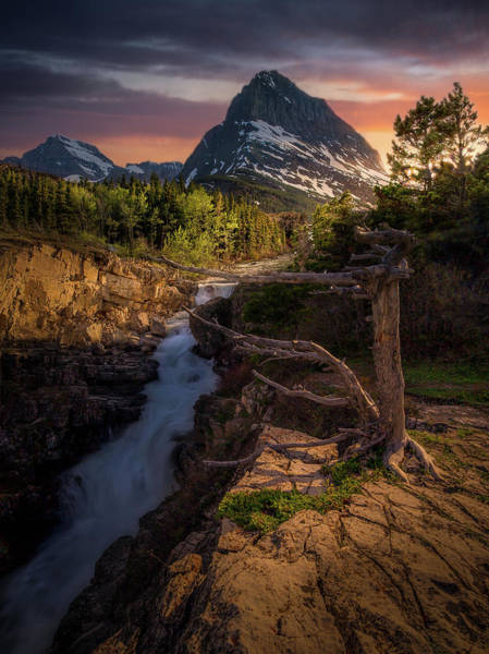 Photograph - Evening Light / Swiftcurrent Falls, Glacier National Park  by Nicholas Parker
