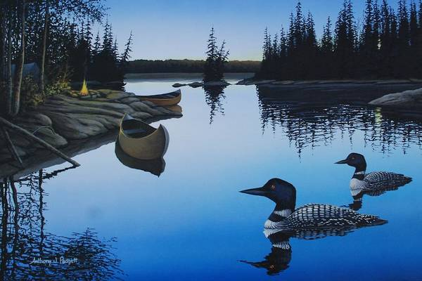Loon Painting - Evening Loons by Anthony J Padgett