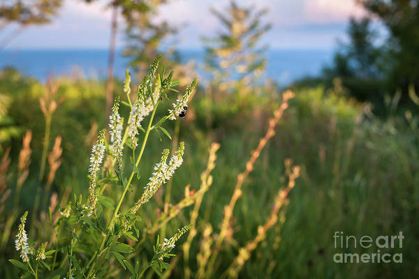Wall Art - Photograph - Evening Meadow by Elena Elisseeva