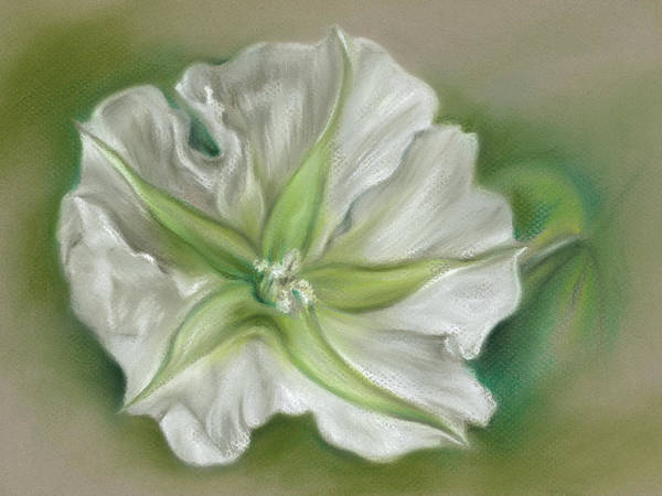 Pastel - Evening Moonflower by MM Anderson