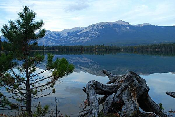 Photograph - Evening Reflections On Edith Lake by Larry Ricker