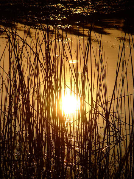 Photograph - Evening Sunset Over Water by Cliff Norton