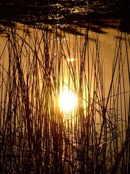 Evening Sunset Over Water Art Print
