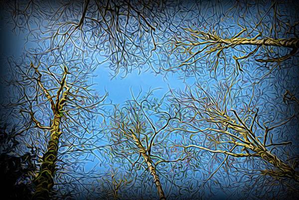 Photograph - Evening Trees by Robert Potts